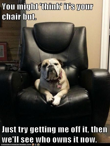 dogs,my chair,funny