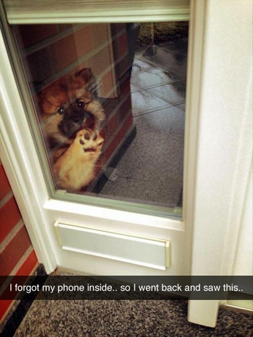 dogs,cute,cell phone,priorities,forgot
