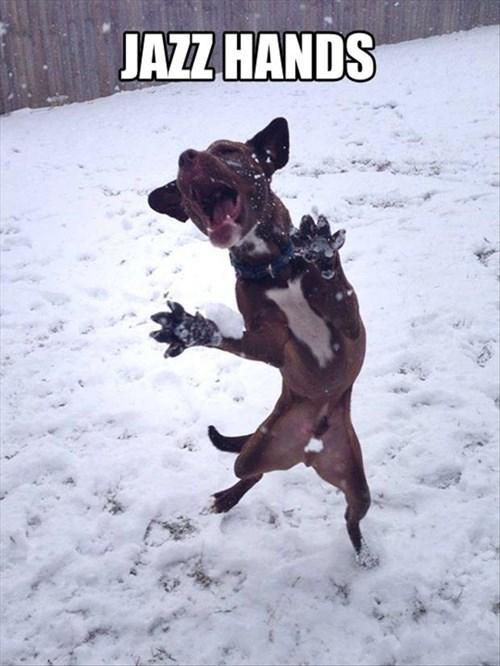 dogs jazz snow puns winter - 8040569856