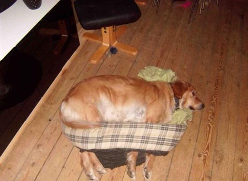 dogs if i fits i sits beds funny - 8040581888