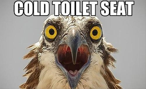 birds First World Problems toilet funny - 8040625408