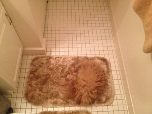 bathroom camouflage Cats - 8040645376
