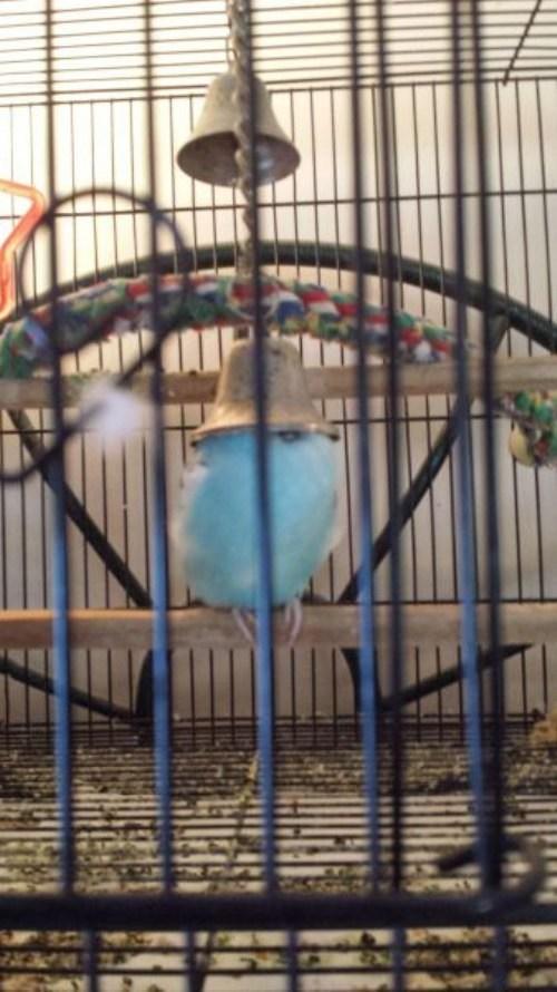 birds bed bell nope puns - 8040699904