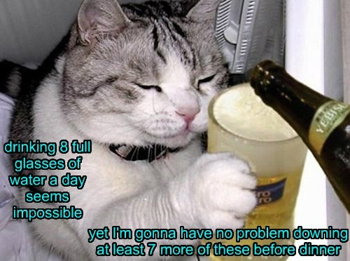 beer Cats conundrum water - 8041165824
