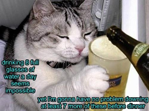 beer Cats water - 8041165824