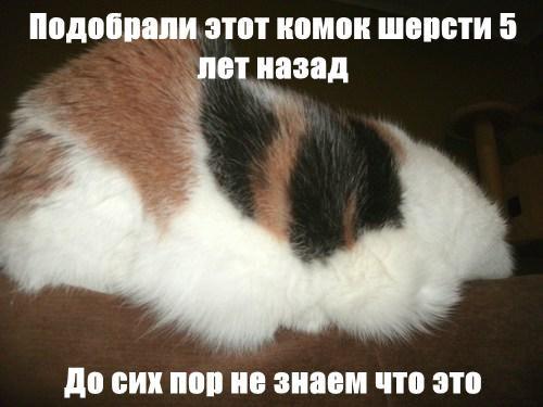 Cheezburger Image 8041346304