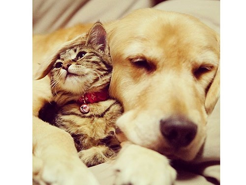 dogs friends people pets cuddles Cats unlikely friendship - 8042301696