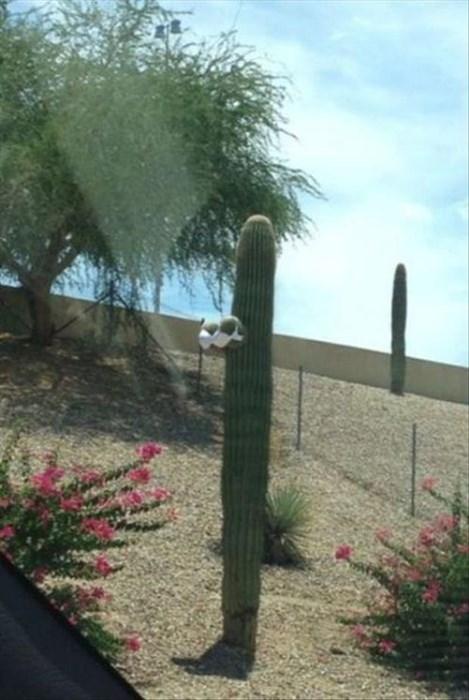 bra poorly dressed cactus g rated