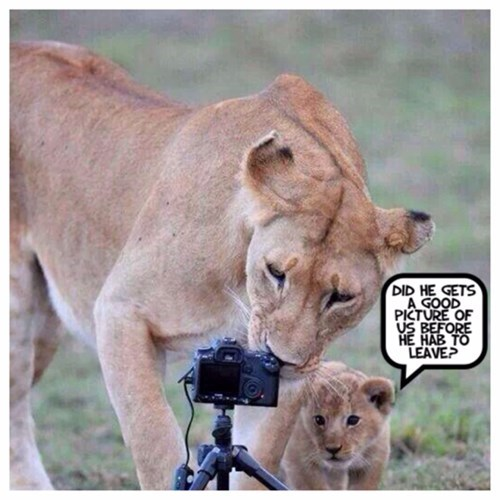 lions,photography,scared,cameras