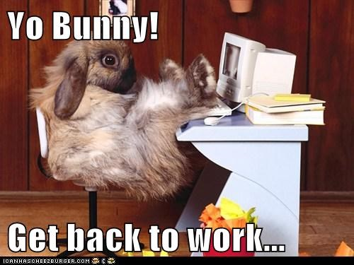 bunnies work funny rabbits