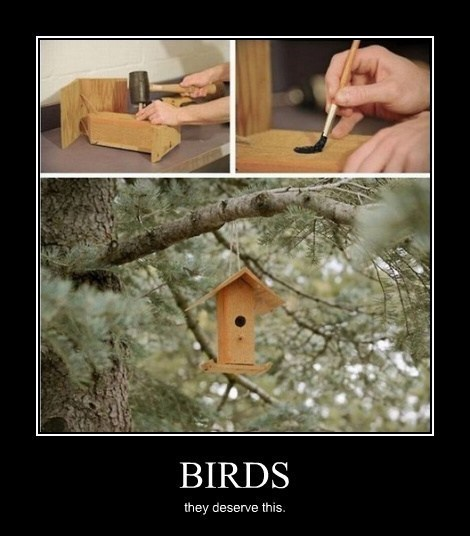 birds,trolling,jerks,funny