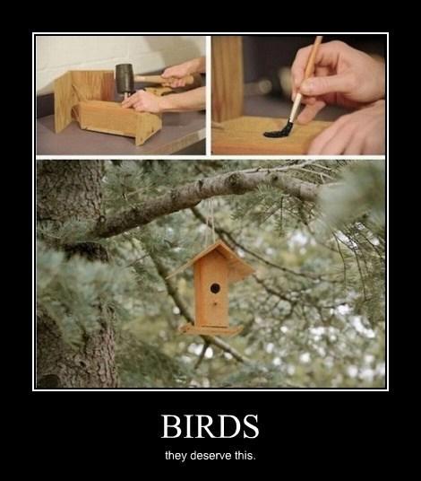 birds trolling jerks funny - 8042501120