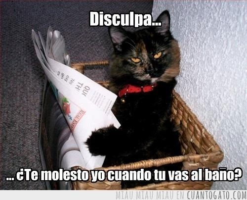 gatos Memes animales - 8042590720