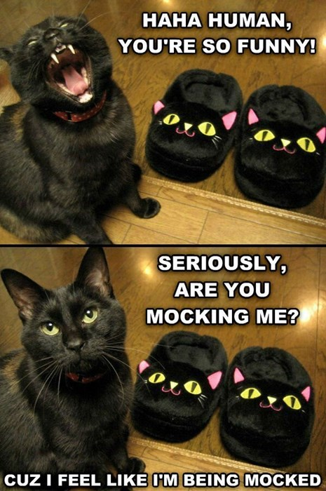 mocked slippers Cats sarcasm - 8042946560