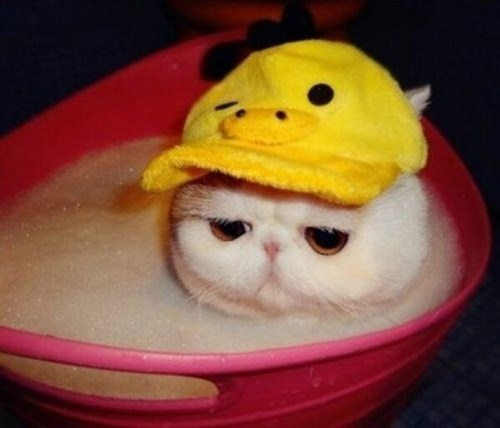bath,top hats,rubber ducky,Cats