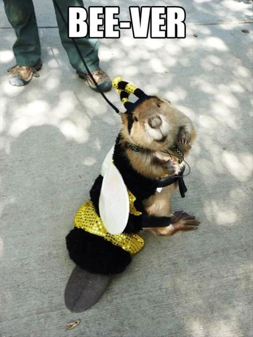 Leash - BEE-VER