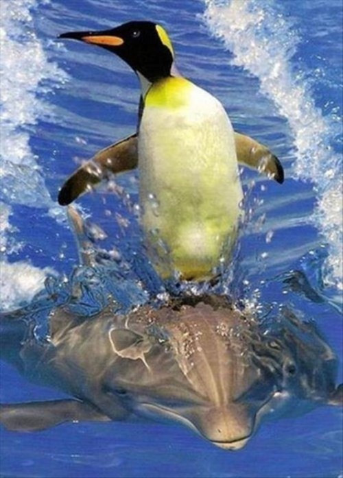 dolphins,penguins,friends,cute,flippers