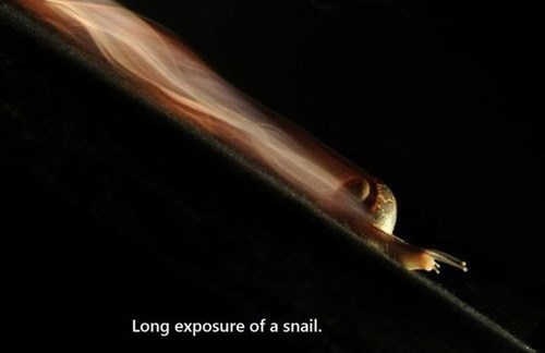 photography,Time-Lapse Thing,snail