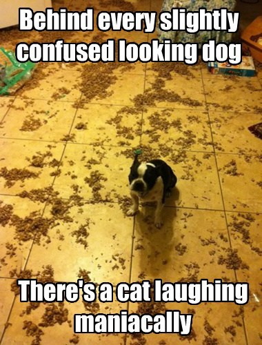 dogs,Cats,funny,guilty