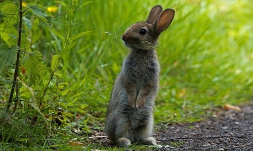 nature country cute rabbits