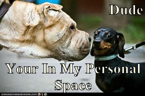 dogs personal space funny