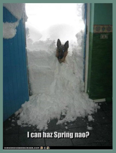 dogs spring snow cold featured user winter - 8046212096