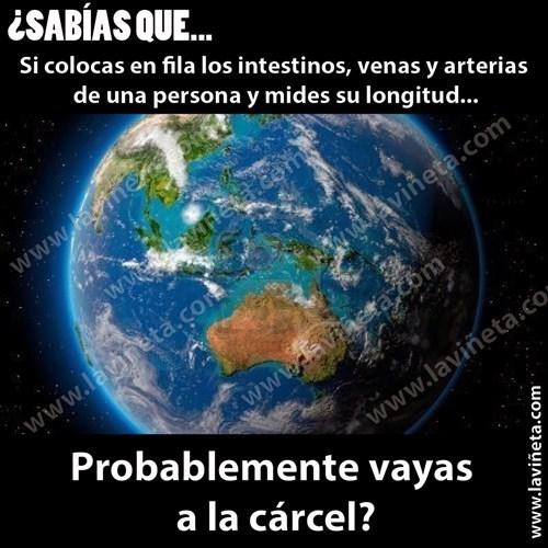 viñetas Memes curiosidades - 8046368256