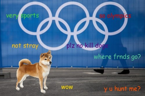 doge Sochi 2014 olympics - 8046428928