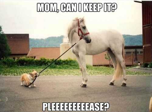dogs horses mom funny - 8046888960