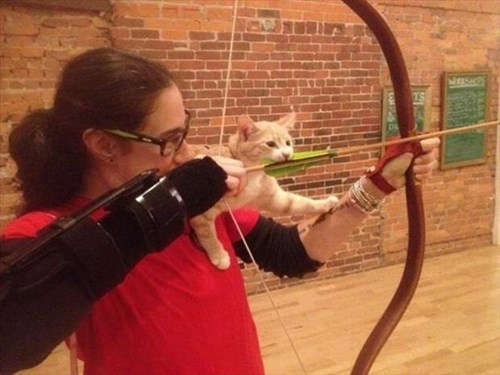 kitten,cute,archery,Cats