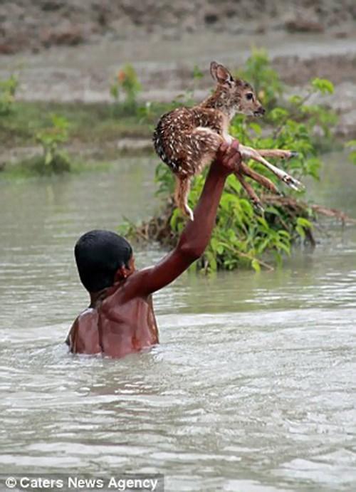 random act of kindness nice animals - 8047043584