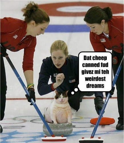 Sochi 2014,dreams,curling,Cats,funny,olympics