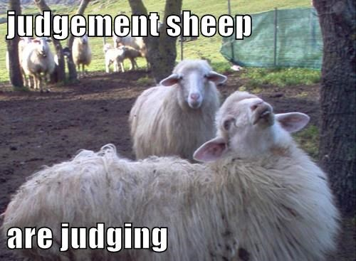 judgement sheep are judging