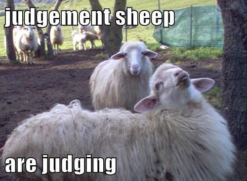 judge sheep funny wool - 8048007680