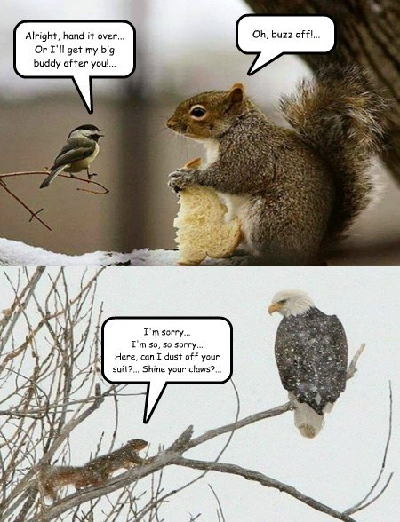 eagle,squirrels,tough,noms