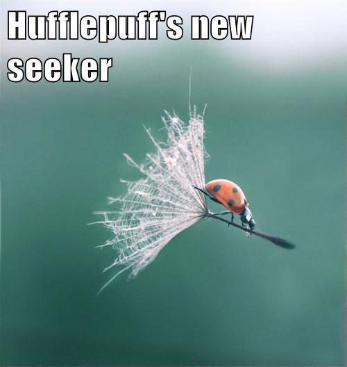 Hufflepuff's new seeker