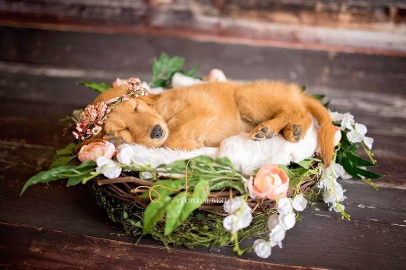 newborn puppy photoshoot