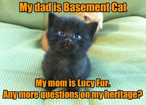 My dad is Basement Cat My mom is Lucy Fur. Any more questions on my heritage?