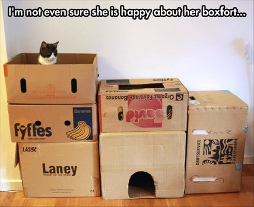 boxes,fort,Cats,funny