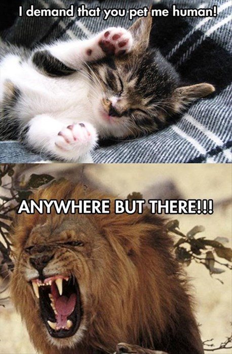 lions pets angry Cats - 8052282112