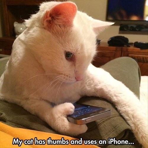 sneaky,thumbs,Cats,iphone