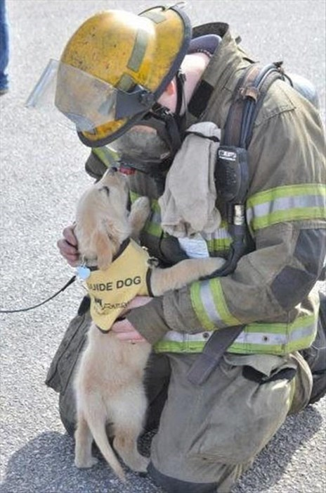 dogs,firefighters,cute,guide dogs