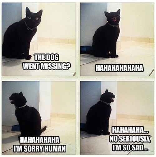 dogs laughing Cats sarcasm - 8052318464