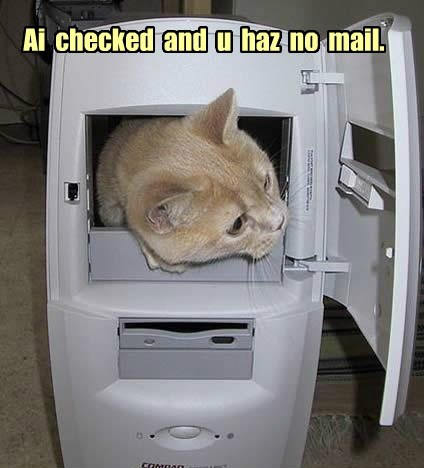 email Cats funny literally - 8052323584