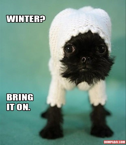 dogs,sweaters,cute,winter,funny