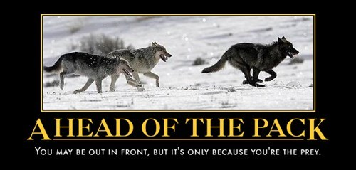 wolves,run,prey,funny,animals