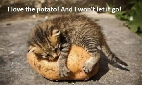 kitten,forbidden love,love,Cats,weird,potatoes,Valentines day