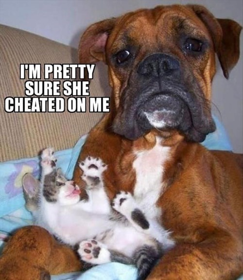 dogs cheating love Cats funny - 8052337664