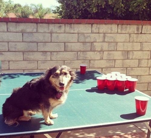 dogs beer pong funny animals - 8053578496