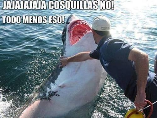 Memes fotos animales - 8053581312